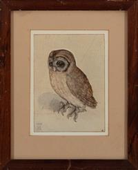 Sale 8934H - Lot 26 - After Albrecht Durer, Owl study, framed size, 34 x 26 cm