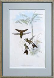 Sale 8347A - Lot 71 - John Gould (1804 - 1881) - Ramphomicron Heteropogon; Ramphomicron Stanleyi 50.5 x 30.5cm, each
