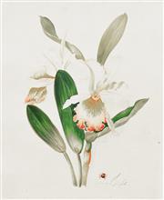 Sale 8652A - Lot 5063 - Vittorio Guidotti (1922 - ) (Italian) - Lily, c1950 35.5 x 25cm