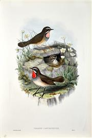 Sale 8582 - Lot 2138 - John Gould (1804 - 1881) - CALLIOPE CAMTCHATKENSIS: Siberian Ruby Throat 54.5 x 37cm (sheet size)