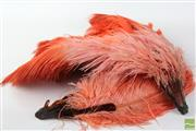 Sale 8481 - Lot 16 - Art Deco Ostrich Feather Burlesque Fans