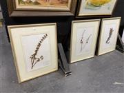 Sale 8936 - Lot 2083 - Botanical Specimens (3)