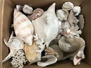Sale 8787 - Lot 1026 - Box of Large Sea Shells