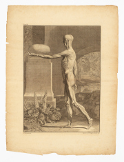Sale 8795A - Lot 30 - After Jan Wandelaar (Dutch, 1690-1759). Pair Of Anatomical Studies - Lateral Plane, 1748, engravings, text including plate number, e...