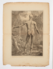 Sale 8795A - Lot 31 - After Jan Wandelaar (Dutch, 1690-1759), Pair Of Anatomical Studies - Posterior Plane, 1748, engravings, text including plate number,...