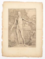 Sale 8795A - Lot 32 - After Jan Wandelaar (Dutch, 1690-1759), Pair Of Anatomical Studies - Anterior Plane, 1747, engravings, text including plate number,...
