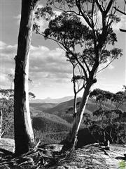 Sale 8721A - Lot 68 - Henry Gold - Northern Blue Mountains, NSW 1978 25 x 20cm