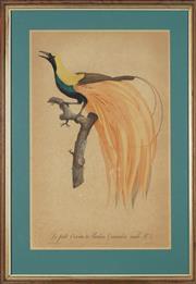Sale 8762 - Lot 2012 - Jacques Barraband (1767 - 1809) - Le Petit Oiseau de Paradis Emeraude, male No. 4 51.5 x 35.5cm