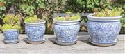 Sale 8422A - Lot 79 - Four ceramic graduated planters with saucers in blue and white (intricate leaf design) containing a variety of succulents, largest h...
