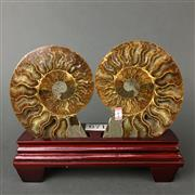 Sale 8638 - Lot 671 - Ammonite Pair, on stand