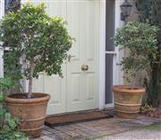 Sale 8550H - Lot 1 - A pair of circular ribbed terracotta pots containing lilli pilli bushes, H 49 x D 53cm