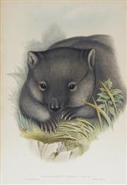 Sale 8732 - Lot 586 - John Gould and H.C Richter - PHASCOLOMYS WOMBAT: Common Wombat 51 x 35.5cm