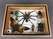 Sale 8638 - Lot 623 - Insect Specimens, framed