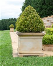 Sale 8677A - Lot 29 - A Pair of stone square form planters with conical shaped buxus. Height 115cm