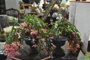 Sale 8368 - Lot 1059 - Pair of Potted Cactus