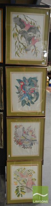 Sale 8503 - Lot 2027 - Peter Longhurst (1922 - ) (4 works) - Australian Birds 54 x 44cm, each (frame size)