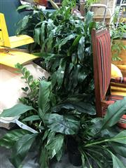 Sale 8822 - Lot 1255 - Collection of Indoor Plants