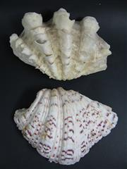 Sale 8331A - Lot 549 - Small Clam Shells (2)