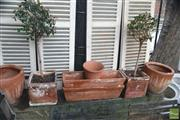 Sale 8383 - Lot 1389 - Collection of Plants and Planters