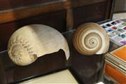 Sale 8331A - Lot 546 - Bailer Shell (damaged) & Another (2)