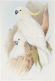 Sale 8867 - Lot 560 - After J.Gould & H.C Richter - Sulphur Crested Cockatoo (Cacatua Galerita) 50.5 x 34.5 cm