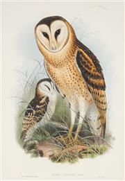 Sale 8867 - Lot 561 - After J Gould & H.C Richter - Grass Owl (Strix Candida) 50.5 x 34.5 cm