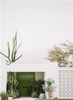 Sale 9252A - Lot 5015 - CACTI giclee 122 x 82 cm (frame: 135 x 105 x 4 cm)