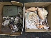 Sale 8567 - Lot 674 - Assorted Sea Shells, in two boxes
