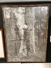 Sale 8816 - Lot 2061 - Vintage Framed Photograph of Axemen Felling a White Gum