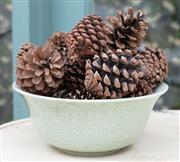 Sale 8866H - Lot 7 - A Celadon crackle glaze bowl with pinecones, diameter 29cm