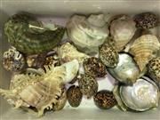 Sale 8638 - Lot 652 - Assortment of Shells