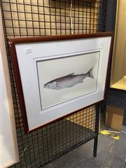 Sale 8924 - Lot 2038 - Artist Unknown - Tasmanian Trout, framed watercolour painting