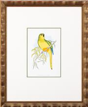Sale 9005H - Lot 23 - An Elegant Parakeet hand coloured Lithograph in a gilt frame, frame size 48cm x 40cm