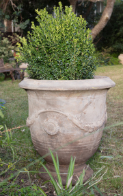 Sale 8795A - Lot 22 - An Anduze style terracotta pot with English buxus, H of pot 71cm