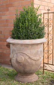 Sale 8795A - Lot 23 - An Anduze style terracotta pot with English buxus, H of pot 71cm