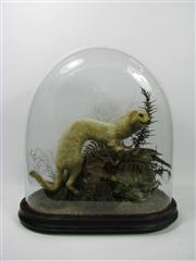 Sale 8331A - Lot 513 - Antique Taxidermy Diorama with Stoat & Bird