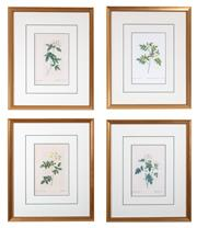 Sale 9005H - Lot 29 - A set of four framed prints of P J Redoute roses, each frame size 42cm x 36cm