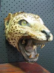 Sale 8331A - Lot 582 - Jaguar Head - trophy mount