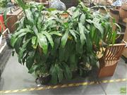 Sale 8620 - Lot 1049 - Collection of Indoor Plants