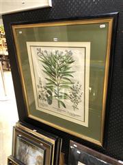 Sale 8865 - Lot 2040 - Antique Botanical print; Nerium Seu Rhodonendron Flore Albo, colour lithograph, 55.5 x 47cm