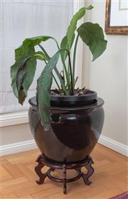 Sale 8562A - Lot 5 - A black ceramic jardiniere on Oriental stand, potted with a peace lily, total H 50cm x D 44cm