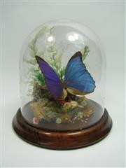 Sale 8331A - Lot 509 - Blue Butterfly Diorama in Dome