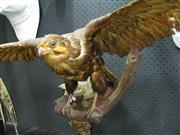 Sale 8331A - Lot 576 - Taxidermy Hawk on Branch