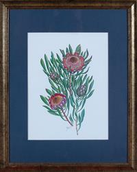 Sale 8934H - Lot 96 - A framed print of waratahs, frame measures 49 x 40 cm