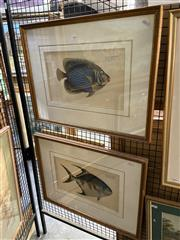 Sale 8891 - Lot 2028 - Pair of Hand-Coloured Antique Engravings