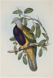 Sale 8867 - Lot 563 - After J Gould & H.C Richter - Carpophaga Magnifica (Magnificent Fruit Dove ) 50.5 x 34.5 cm
