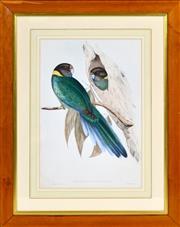 Sale 8394 - Lot 565 - John Gould & Henry C. Richter (XIX - XX) - PLATYCERCUS SEMITORQUATUS: Yellow-collard Parakeet 48 x 33cm