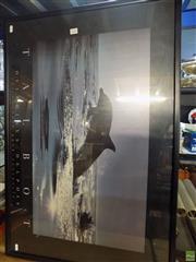 Sale 8557 - Lot 2093 - Talbot Delphinus, Dolphin Poster, frame size: 64 x 94.5cm