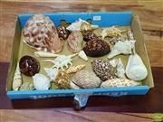 Sale 8629 - Lot 1073 - Box of Varied Sea Shells