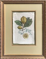 Sale 8682 - Lot 2019 - A set of (5) Antique hand-coloured engravings Botanical Studies - Limones, each 62 x 49cm (frame size)